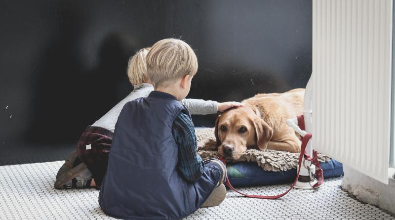 Autismo e Pet Therapy l'efficacia degli interventi assistiti con gli animali